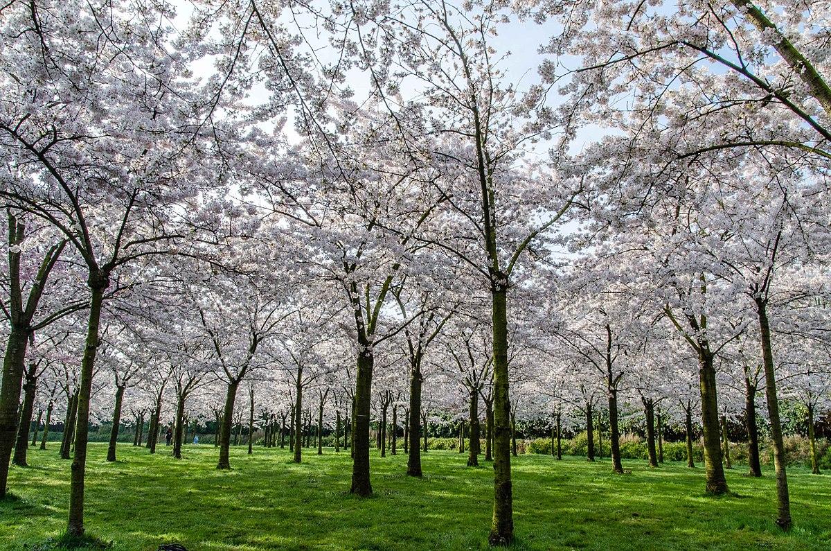 Frühling im Amsterdamse Bos